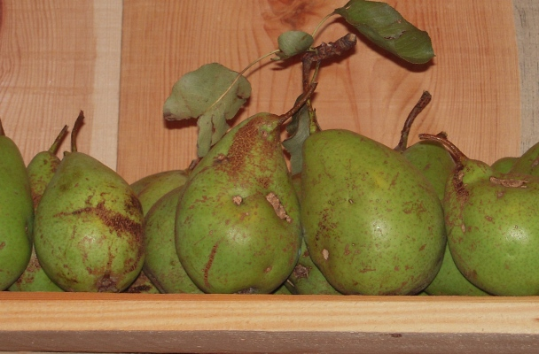 Display of Pears, France 2014