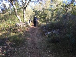 Camino Portuguese- woodland track Ansiao