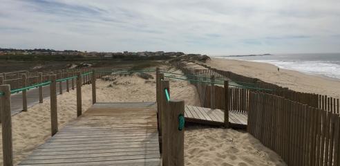 Camino Portuguese Coastal - Arvore